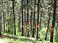 Bosque de Oma (6).JPG