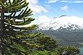 Bosque primario 02.jpg