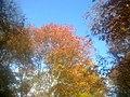 Bossen bij Nieuw-Milligen - panoramio.jpg