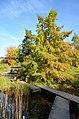 Botanischer Garten der Universität 2012-10-20 14-30-40.JPG