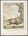 Bradypus didactylus - 1700-1880 - Print - Iconographia Zoologica - Special Collections University of Amsterdam - UBA01 IZ21000135.tif