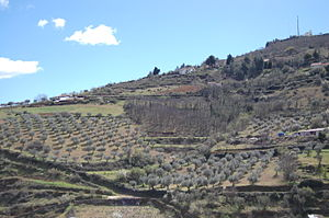 Bragança, Portugal - Olive trees along the slopes of Bragança