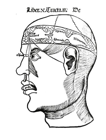 Brain, G Reisch