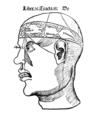 Brain, G Reisch.png