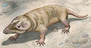 <i>Brasilitherium</i> Genus of prozostrodontian cynodonts