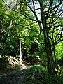 Bridleway in Ashford Hanger - geograph.org.uk - 955717.jpg