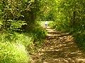 Bridleway to Book Hurst - geograph.org.uk - 1858668.jpg