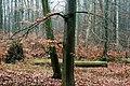 Buczyna Natural Reserve (3).JPG