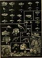 Bulletin (1951) (20412001582).jpg