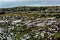 Burren - Hillside along R480 - geograph.org.uk - 1613839.jpg