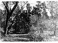 Bush Land View(GN05036).jpg
