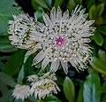Butchart Gardens - Victoria, British Columbia, Canada (29010535991).jpg