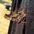 Butterfly (14651647059).jpg
