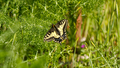 Butterfly (8601605966).png