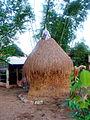 Cây rơm ở Việt Nam.jpg