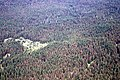 C.2003. Mountain pine beetle damage in lodgepole pine. (39971689851).jpg