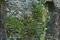 C2 0122 muurvegetatie 1 gent 1 gent 19 - 369579 - onroerenderfgoed.jpg