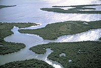 Irregular shaped swampy islands