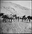 CH-NB - Persien, Elburs-Gebirge (Elburz)- Pferde - Annemarie Schwarzenbach - SLA-Schwarzenbach-A-5-06-189.jpg
