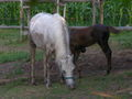 Cabalo121eue.JPG