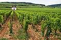 Cabottes, Beaune, France.jpg