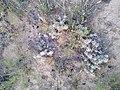 Cacti in NM 4.jpg