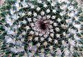 Cactus (3293336472).jpg
