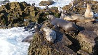 File:California sea lions conflict (70383).webm