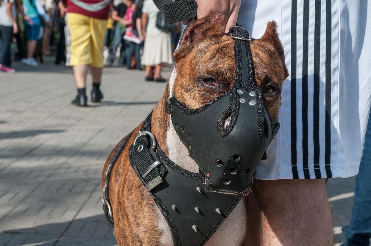 Vicious Dog Barking Video