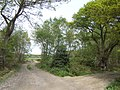 Cane Wood - geograph.org.uk - 413328.jpg