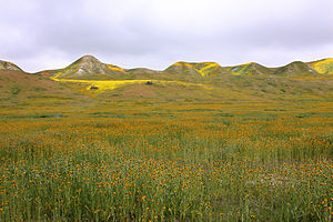 Ecology of California - The Carrizo Plain grassland in springtime