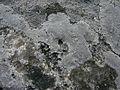 Carnac Kermario 11.jpg