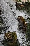 Caserta Fuente de los Delfines 11.jpg