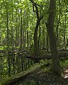 Caw Caw Swamp Walk - panoramio.jpg