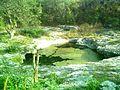 Cenote Chen Ha (08).JPG