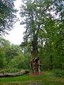 Chêne de Saint Jean P1080156.JPG