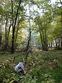 Checking the mud for a bog turtle (5261560162).jpg