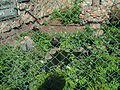 Chelyabinsk Zoo 5.JPG