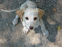 chiots a adopter