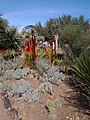 Chihuly in the Desert Botanical Garden - panoramio (4).jpg