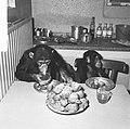 Chimpansees Hilda en Tilly uit Artis, Bestanddeelnr 917-2814.jpg