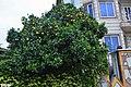 Citrus in Sari.jpg