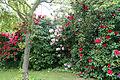 City of London Cemetery - flowering shrubs 09.jpg