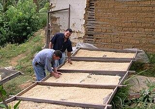 Coffee production in Honduras