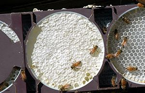 Comb honey - Comb honey production using Ross Round style equipment: center comb is complete, right in progress