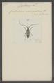 Coptomma - Print - Iconographia Zoologica - Special Collections University of Amsterdam - UBAINV0274 033 28 0003.tif