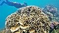 Coral Reef in Malluse Tasi.jpg