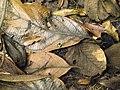 Costa Rica (6110559494).jpg