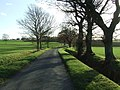Country Road - geograph.org.uk - 1595577.jpg