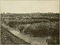 Country life reader (1916) (14768493321).jpg